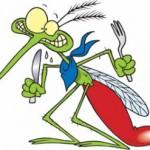 moustique-dessin